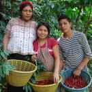 Exportadora De Café Especial De Guatemala