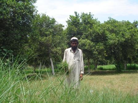 Gullzaman